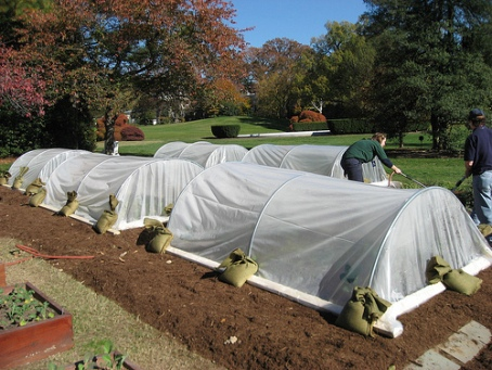 A White House hoop house.